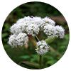 ZenLiningedients - Zen Herbal Liniment Spray & Gel