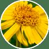 arntica - Zen Herbal Liniment Spray & Gel