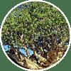 commi - Zen Herbal Liniment Spray & Gel